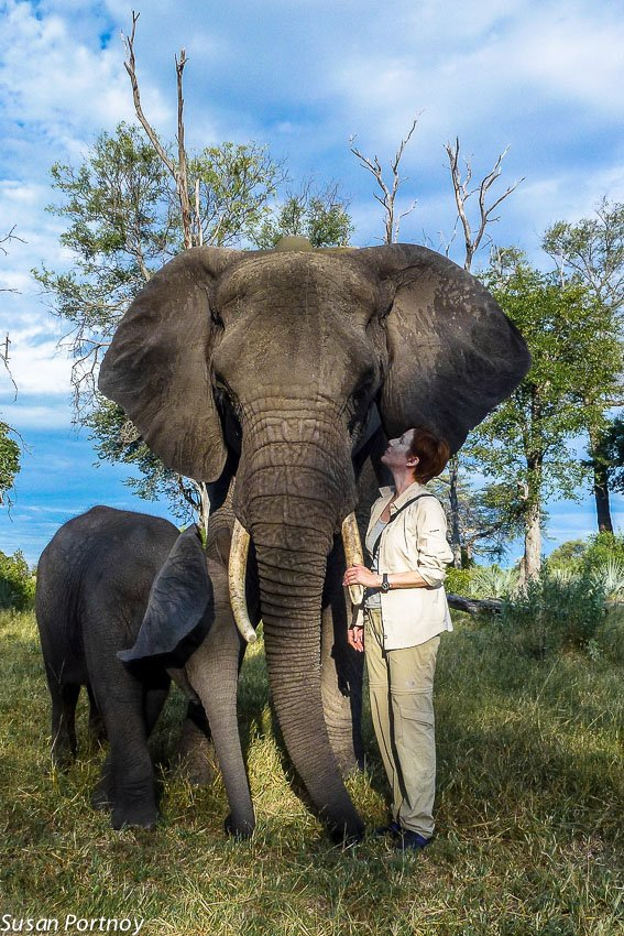 Susan Portnoy next to one of the elephants at Abu Camp