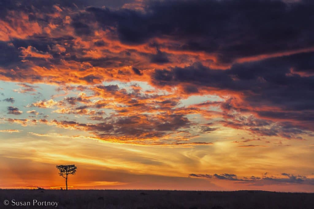 Stunning Silhouette Photos Guaranteed to Inspire Your Travels-A lone acacia is dwarfed by a Masai Mara sunset