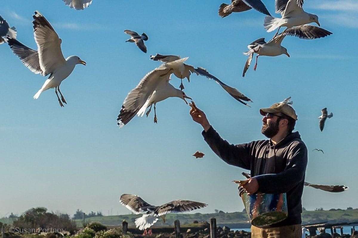 man-feeding-seagulls-in-berkeley-california-020801