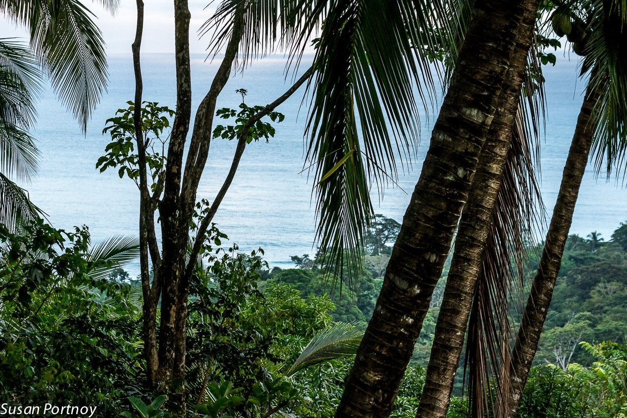 View from the rainforest in Costa Rica