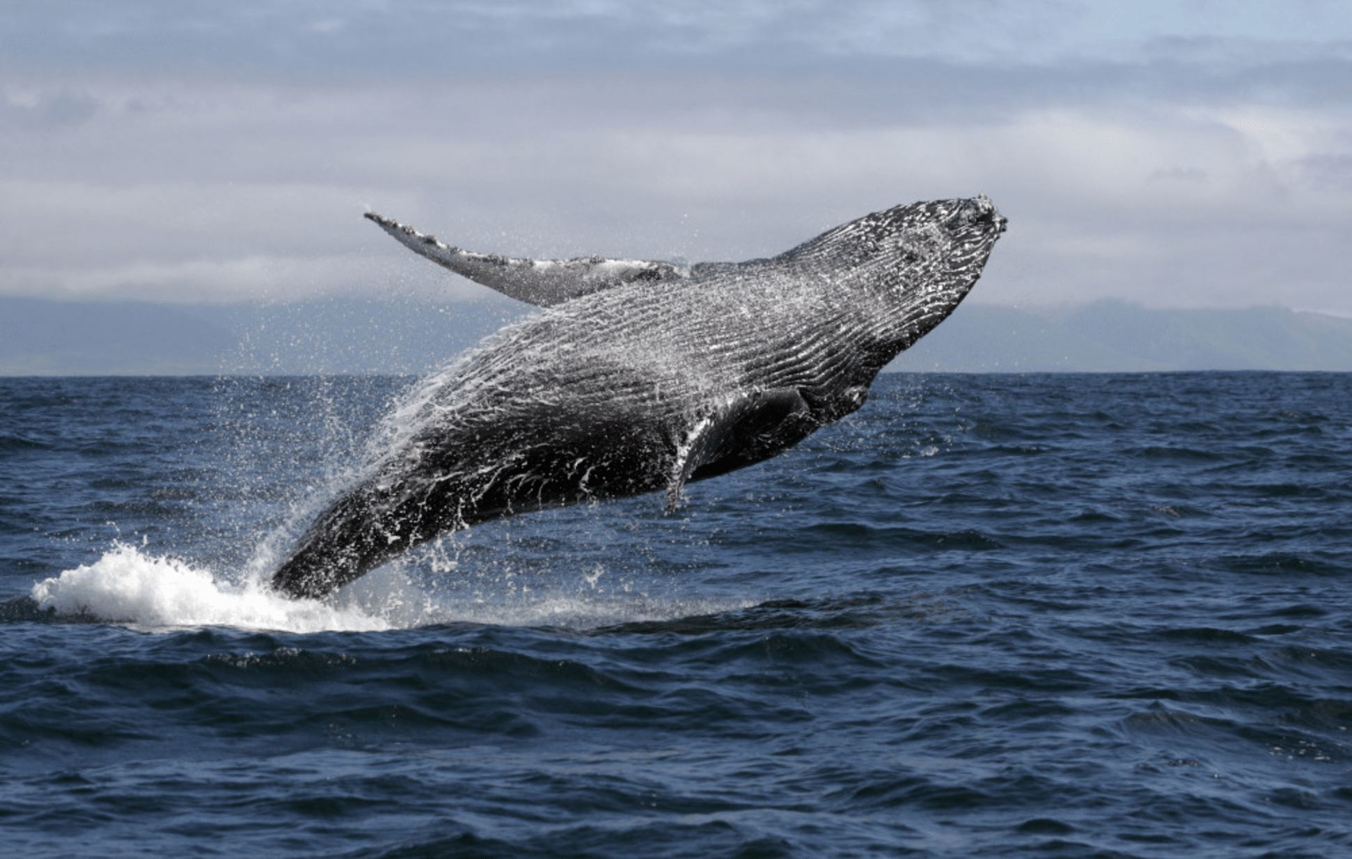 5 Amazing Lesser-Known African Wonders On My Must-See List- whale