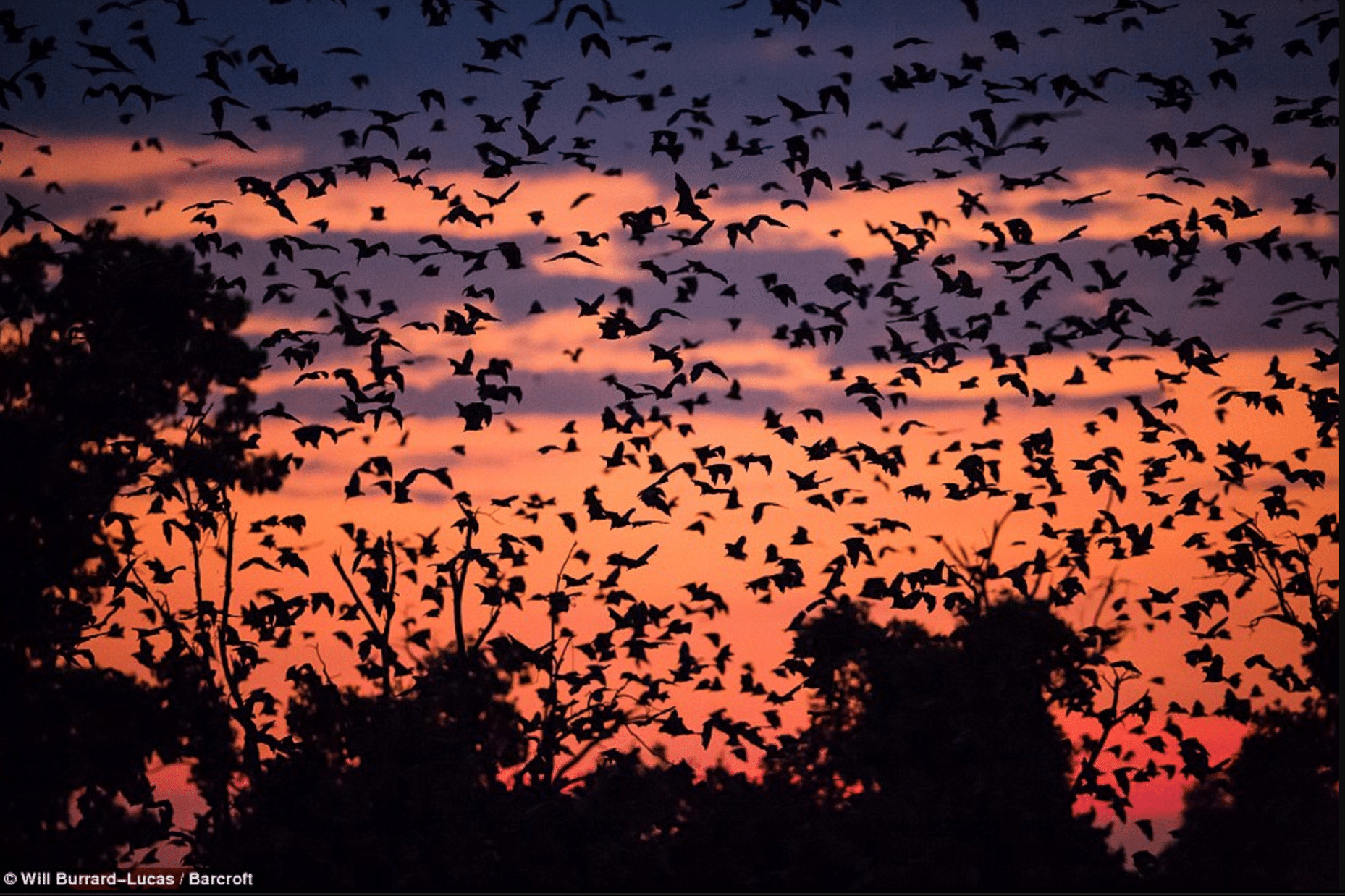 5 Amazing Lesser-Known African Wonders On My Must-See List- Fruit bat migration
