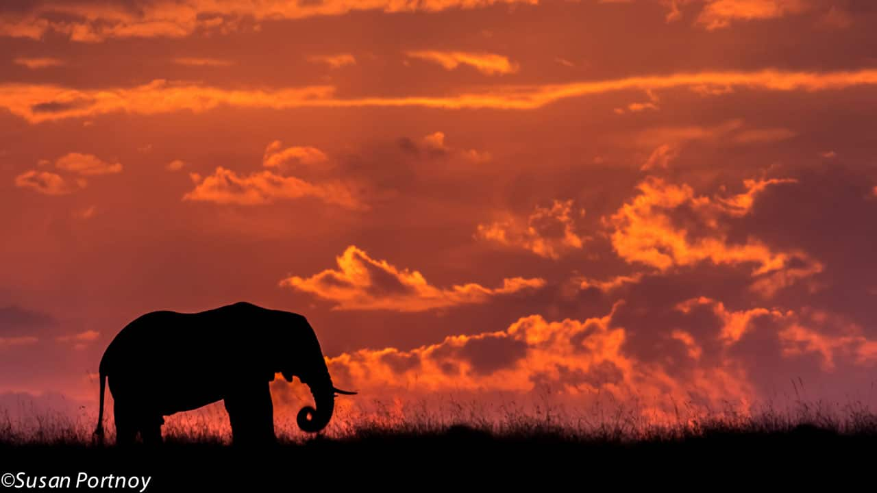 One of the most magnificent endings to a day I've ever had. A glorious fiery sunset and a majestic elephant in silhouette.