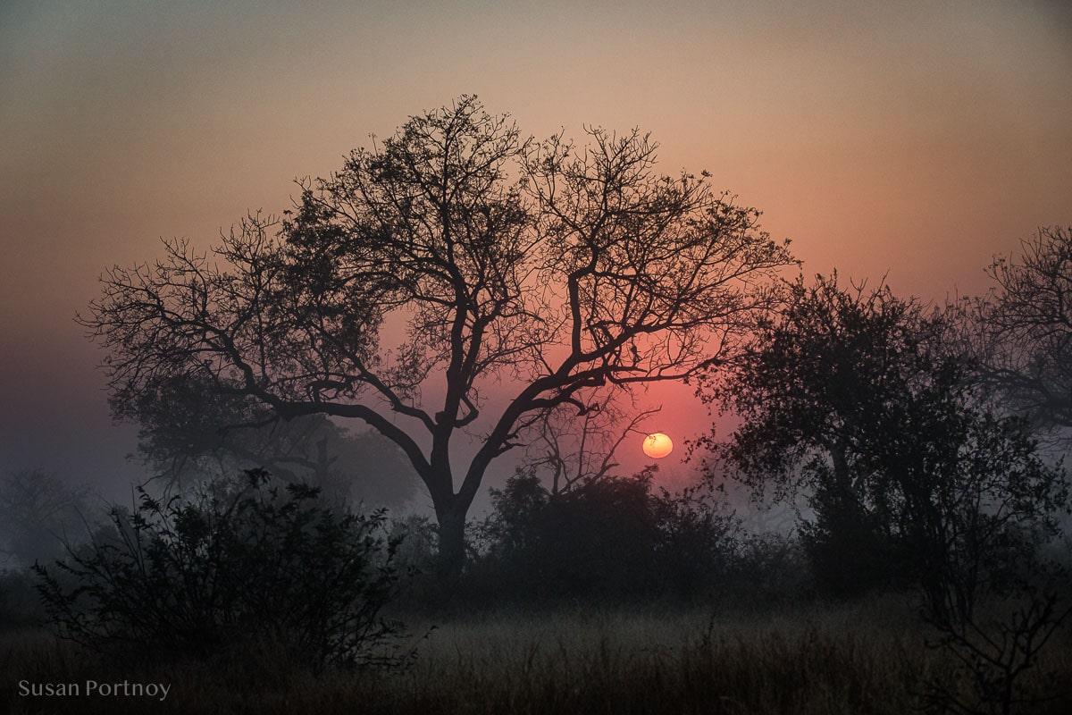 Sunrise in Timbavati, South Africa - Timbavati Game Reserve