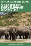 Why An Amboseli Safari Should be on Every Elephant Lover's List