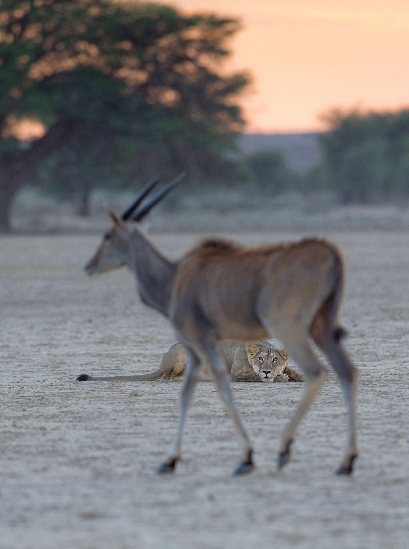Photo: Eyes on the Prize by Morkel Erasmus