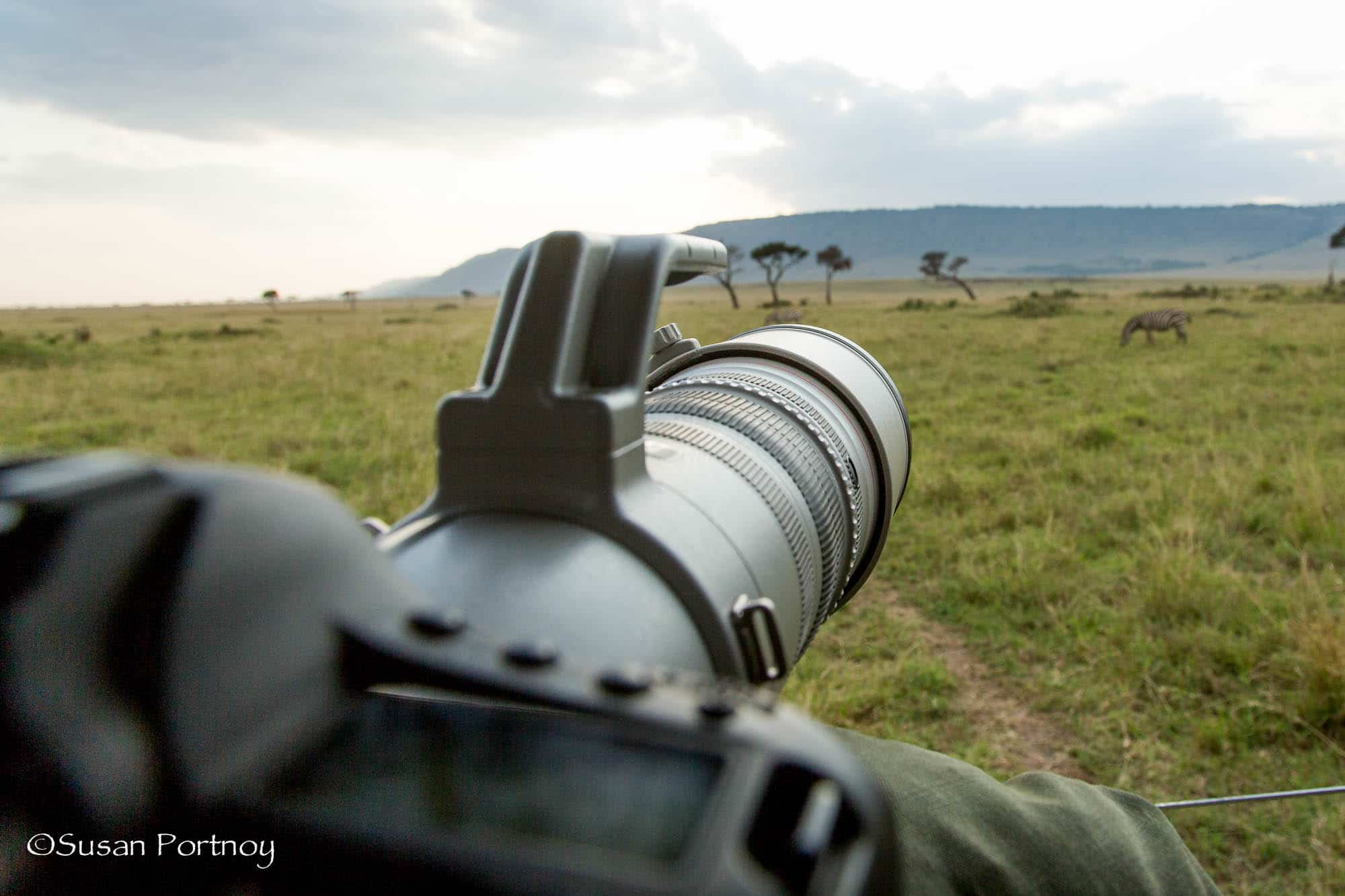 My camera pointing towards a lion very far away in a tree during a game drive on safari.