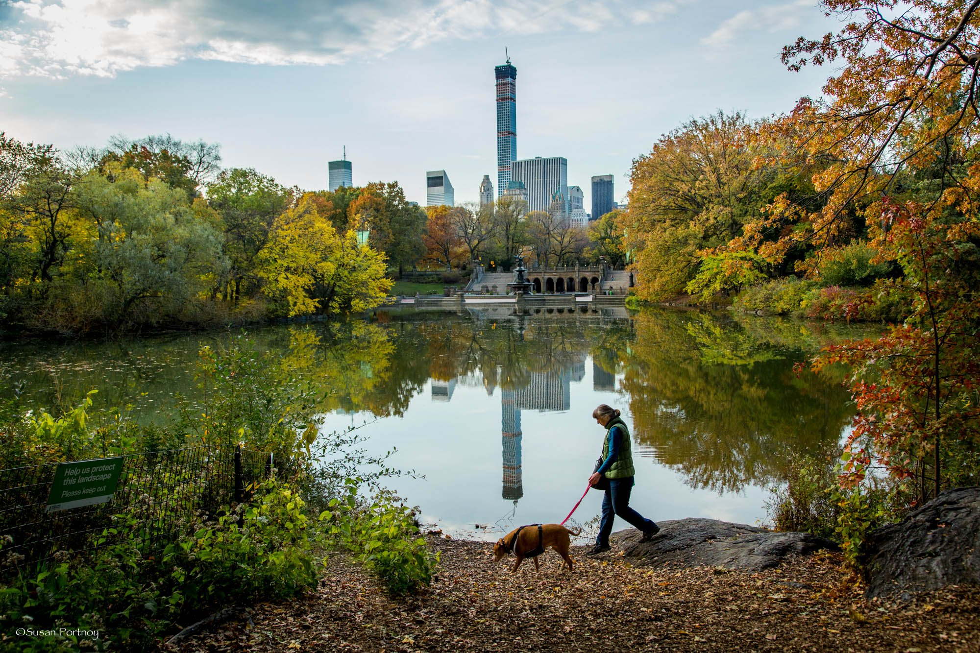 A woman walks her dog in Central Park across from Bethesda Fountain