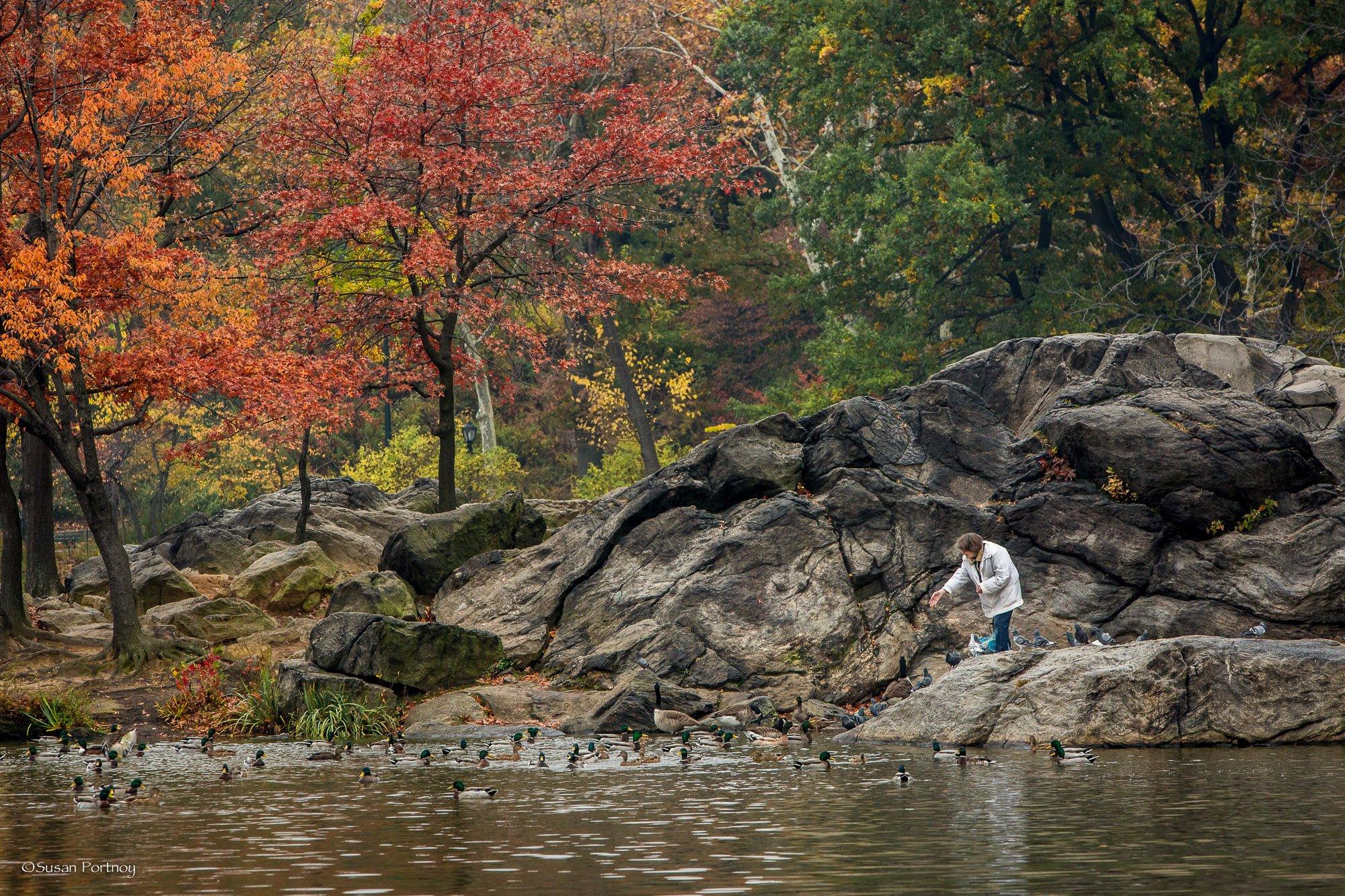 Lillian Bobo feeds the birds of the Hernshead in Central Park