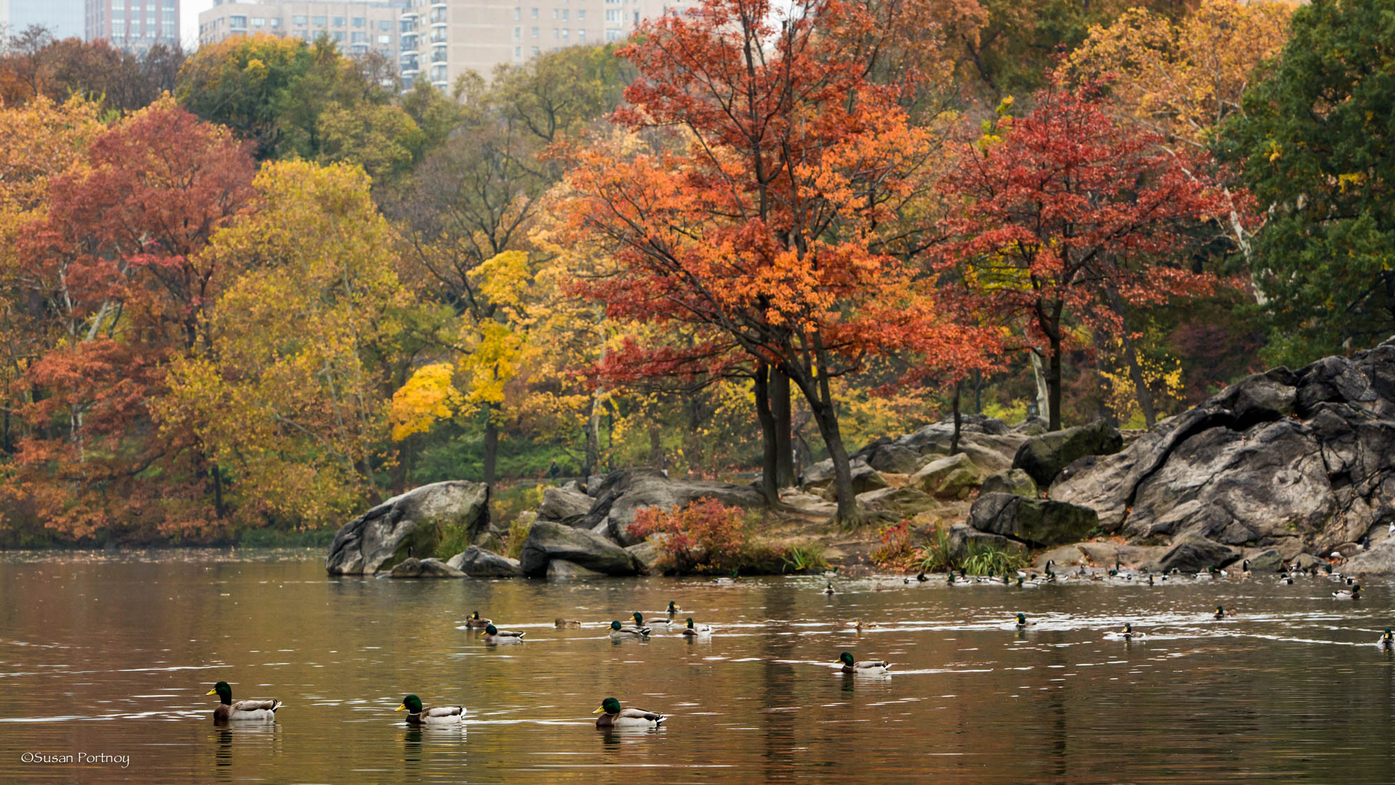 The Hernshead in Central Park, NYC