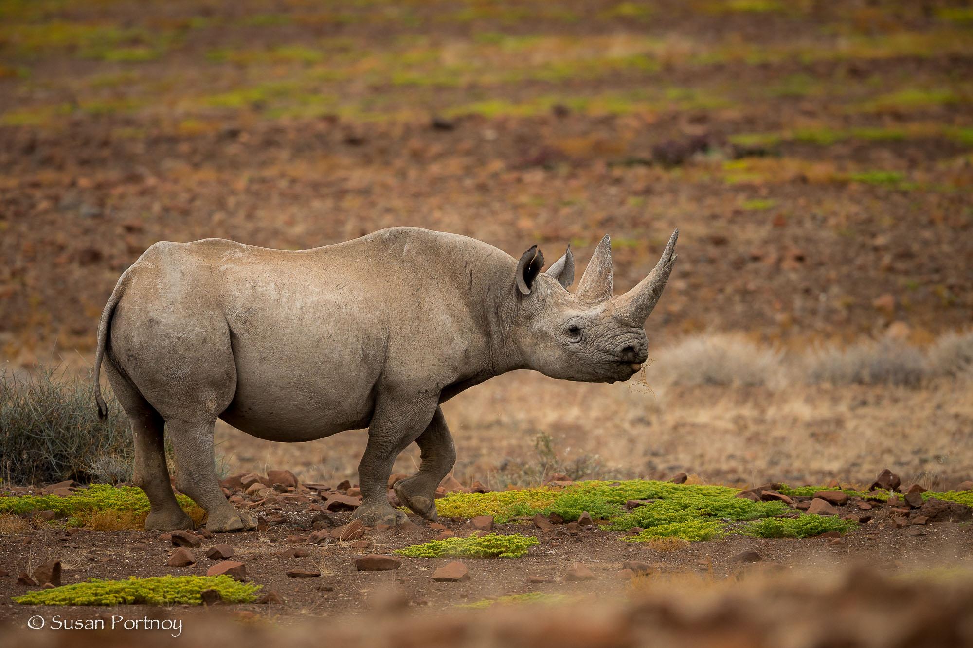 Kangombe near Desert Rhino Camp, Namibia
