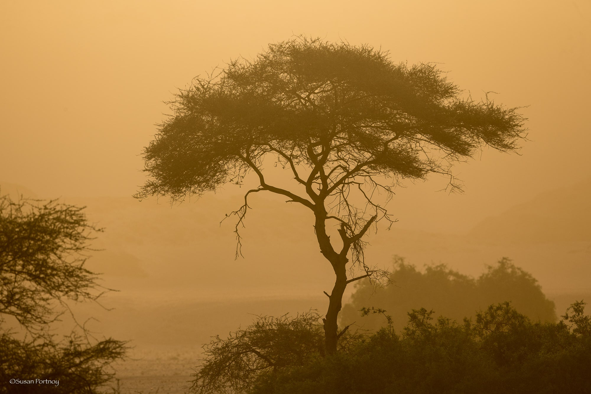 A tree drenched in a sandy haze after a sandstorm near Hoanib Skeleton Coast camp in Namibia
