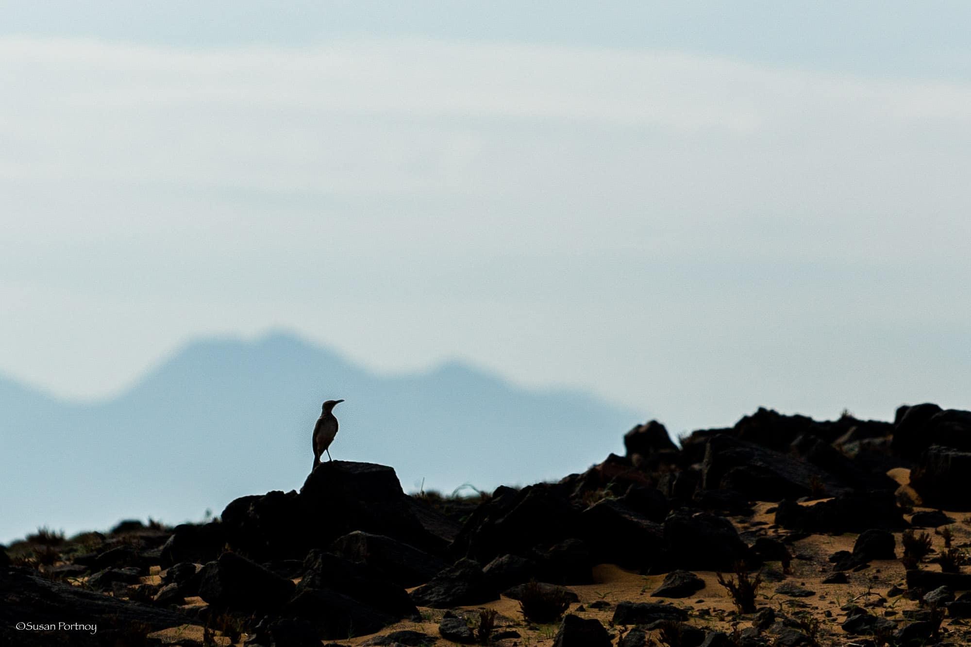 Tiny bird in Silhouette at Serra Cafema in Namibia