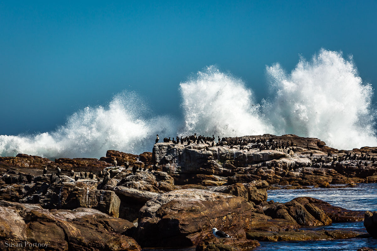 Waves crashing upon the rocks and shore at Cape Point South AFrica