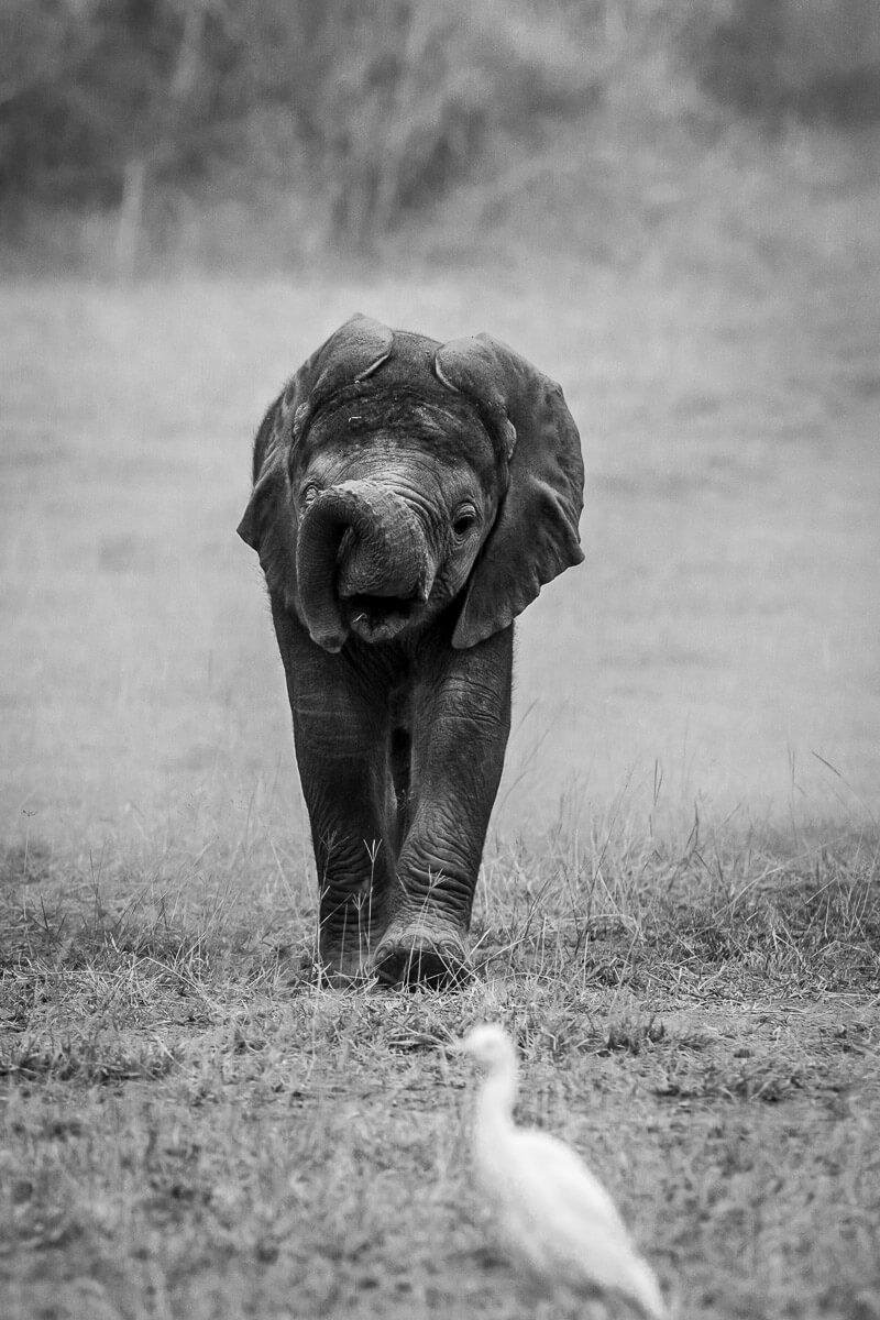 World Elephant Day 2017 -SPortnoy_20140617_8519