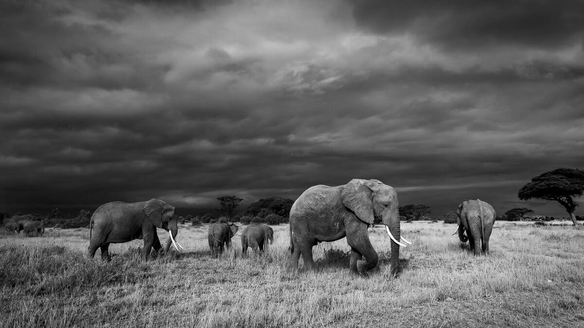 World Elephant Day 2017 -SPortnoy_20140622_8964