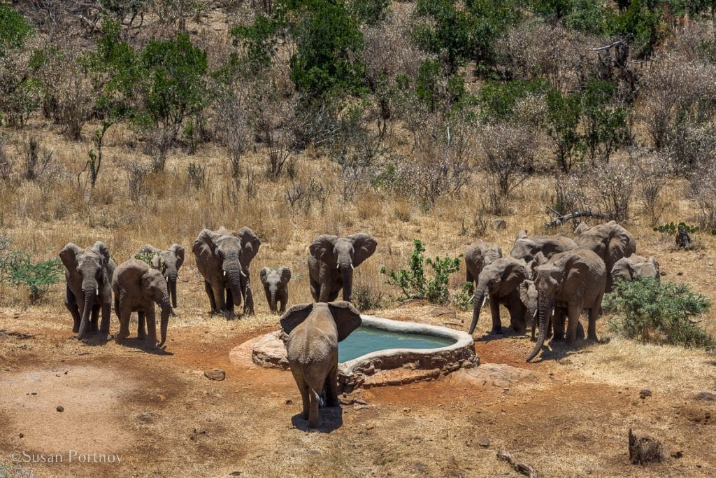 Overlooking a watering hole with elephants - Kenya Safari Lodges with Spectacular Views -1412