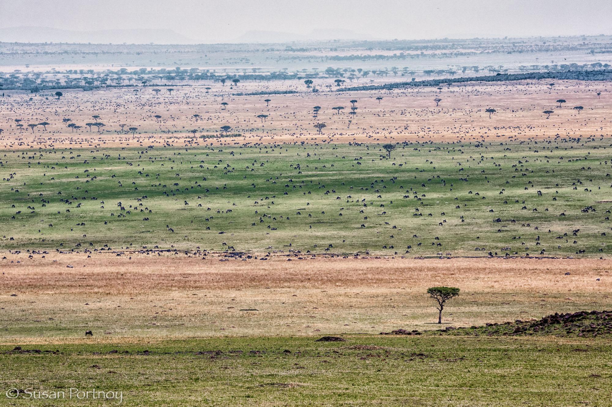 Landscape photos celebrating Earth Day_SusanPortnoy-17