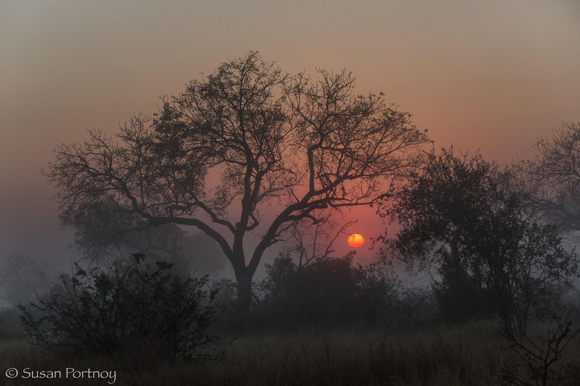 Landscape photos celebrating Earth Day_SusanPortnoy-18