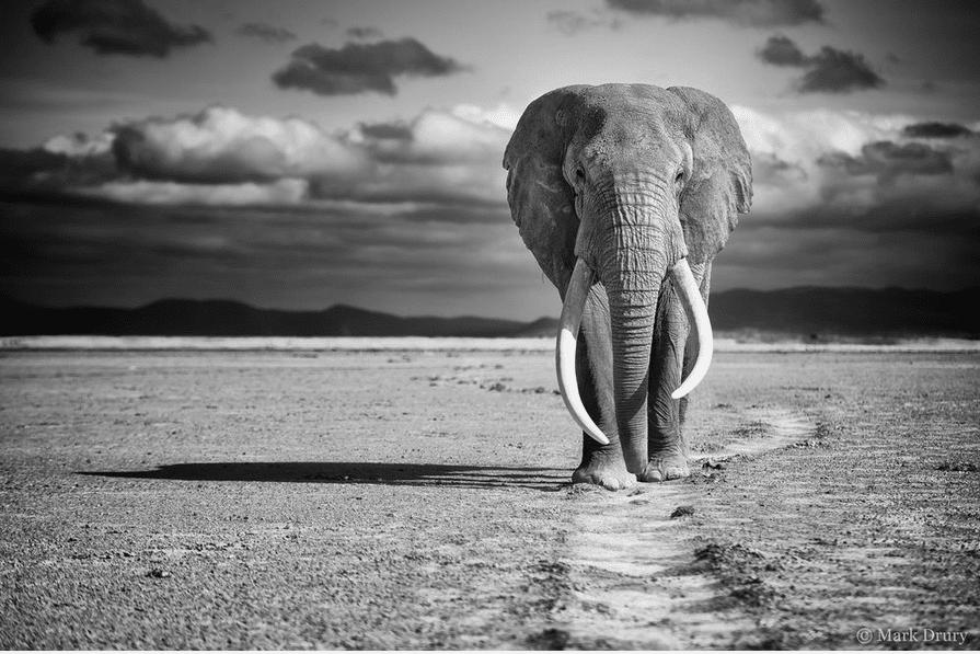 Photo: Mark Drury
