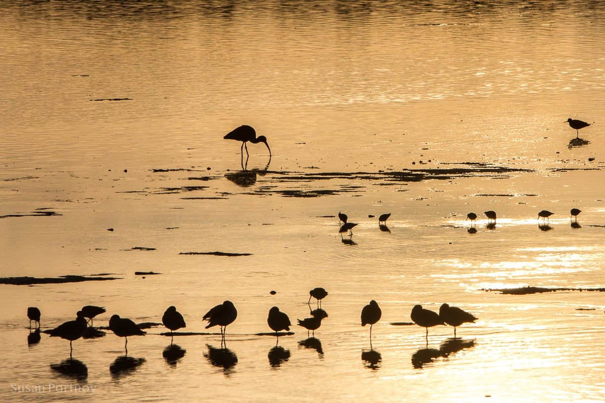 Bird silhouettes at sunset in the water at Ding Darling, Sanibel Island