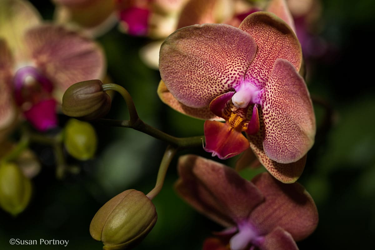 Ny Botanical Garden Orchid Show Thailand 2 The