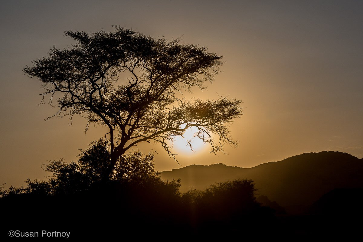 Silhouette of a tree and mountains in Namibia with the sun setting