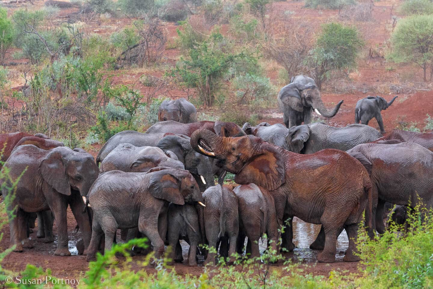 Tips for Taking Amazing Wildlife Photos on a Safari Adventure--herd of elephants drink from a watering hole near Molori Safari Lodge in South Africa