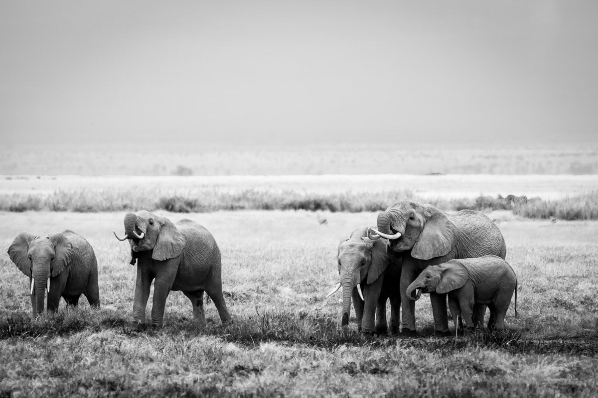 How You Can Help Save the Elephants on #WorldElephant Day-SPortnoy_20140618_1013