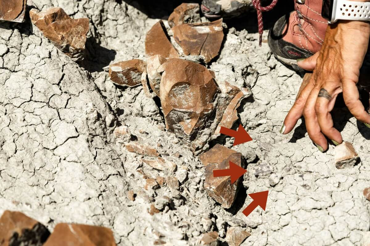 Wendy points to fossil of egg shell_Finding Fossils with Wendy Sloboda- The Badland's Badass Dinosaur Hunter, Devil's Coulee, Alberta, CA
