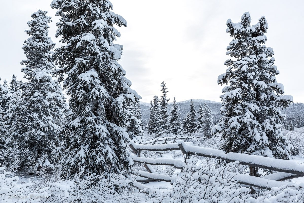Winter wonderland at Sky High Ranch in Whitehorse, Yukon