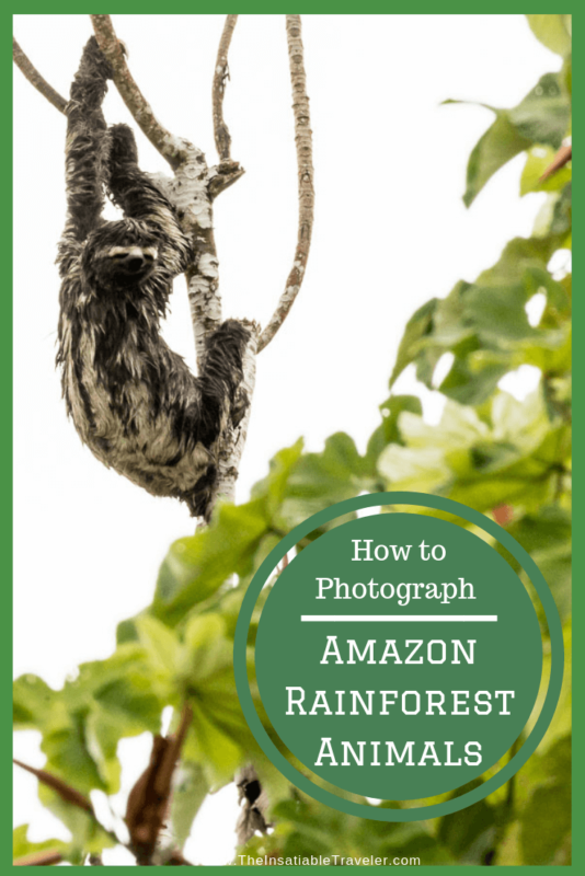 Tips for Photographing Amazon Rainforest Animals
