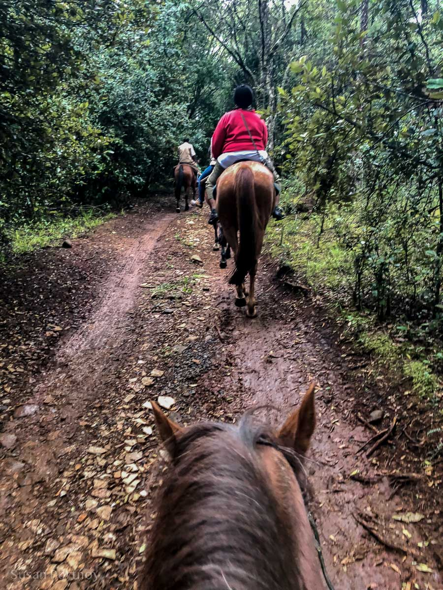 Horseback riding at Mount Kenya Safari Club - How to Experience More Beyond Kenya's Big Five -241720181102