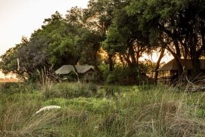 View from the boardwalk at my tent on the far left - Duba Explorers Camp Okavango Delta Safari Botswana