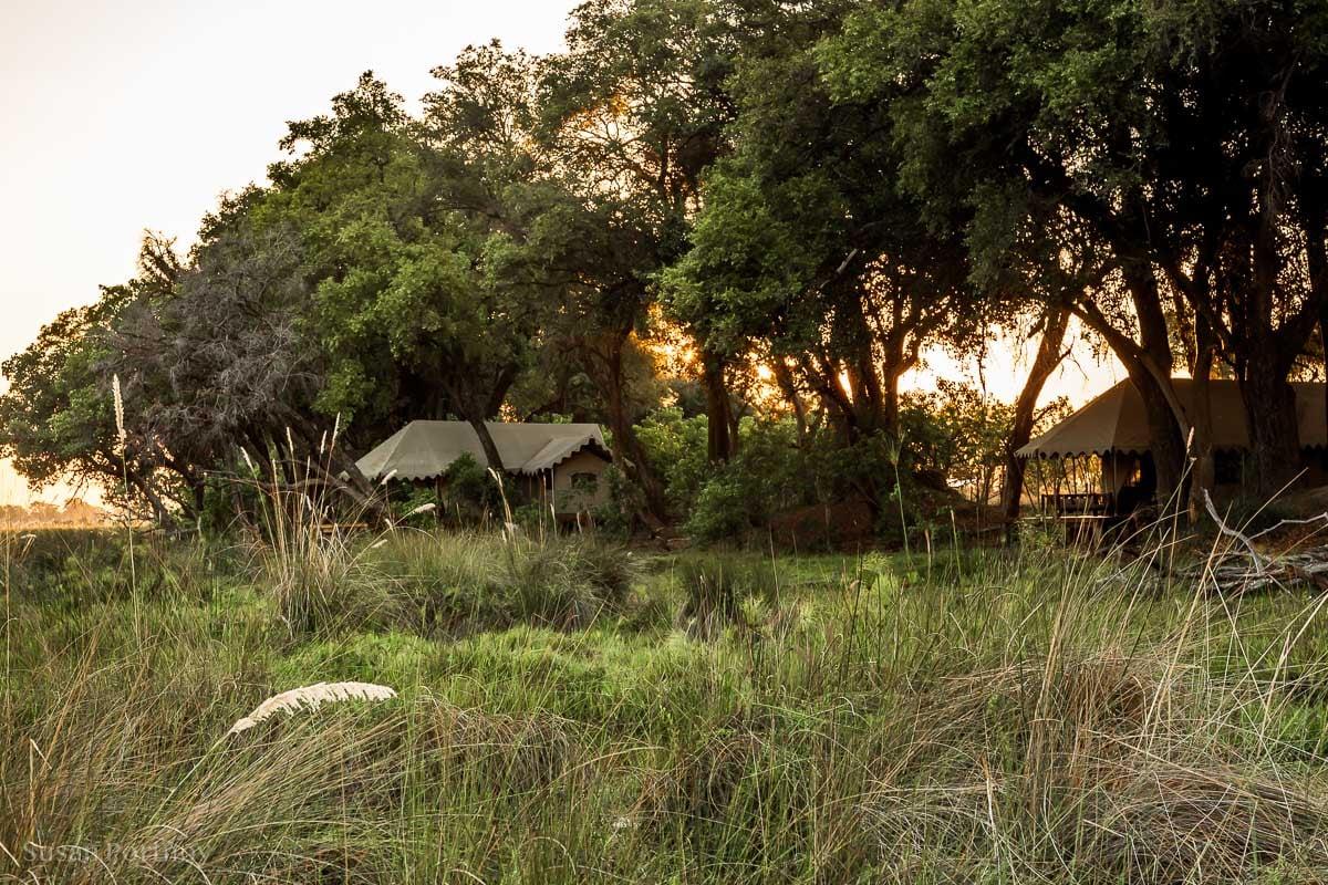 View from the boardwalk of my tent on the far left - Duba Explorers Camp Okavango Delta Safari Botswana