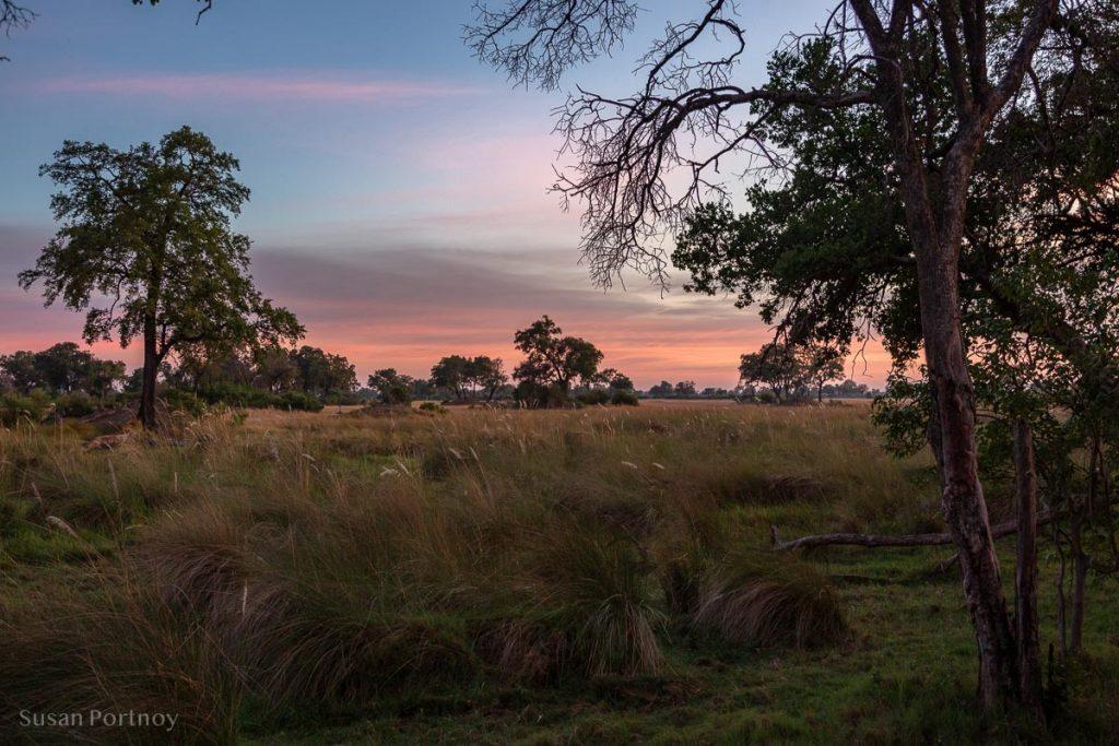 The view of the Okavango Delta from my tent at sunrise -Duba Explorers Camp Okavango Delta, Botswana-2901