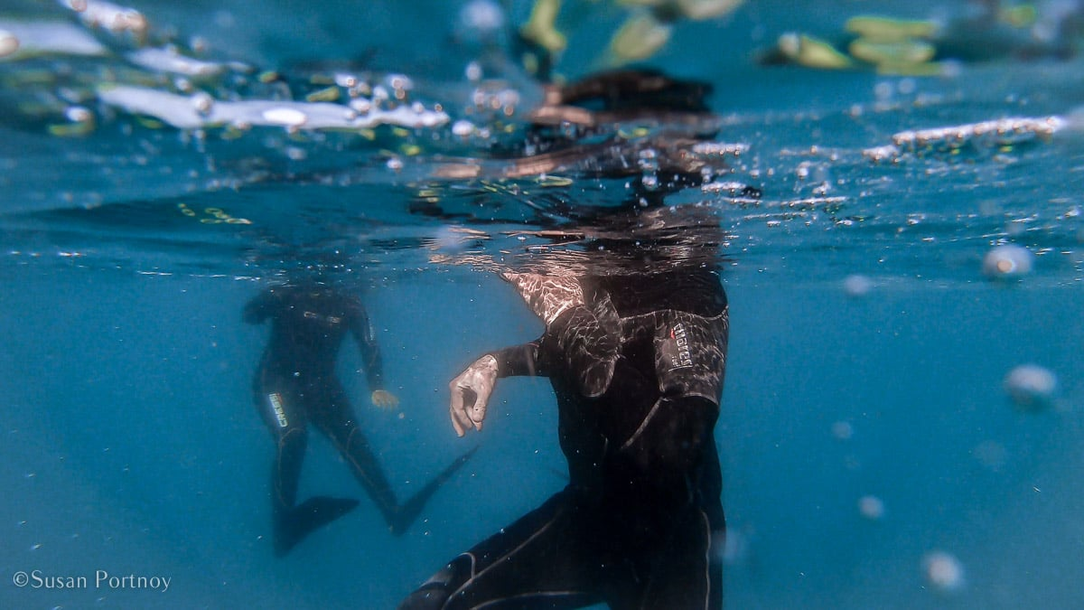 An underwater view of snorkelers in an oceanfrom the next down.