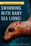 Swimming with baby sea lions in the Sea of Cortez Mexico