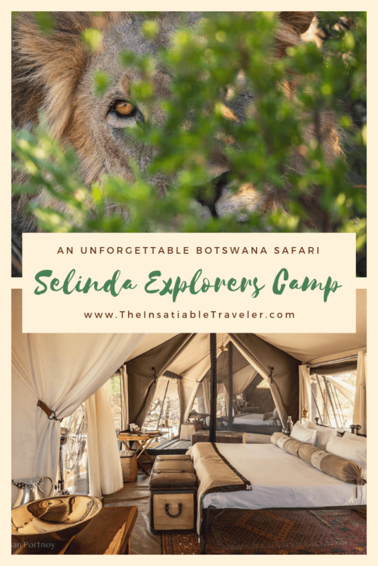 Wild dogs, roan, caracal, serval & sable. All rare animals and yet I saw them all in one Botswana safari at Selinda Explorers Camp in the Okavango Delta. Leopards and Lions too! #Botswanatravel #Botswanasafari #wildlife #Wildlifephotography #OkavangoDeltaBotswana #OkavangoDeltaphotography #OkavangoDeltaSafari #Africanwildlife #Africanwilddog