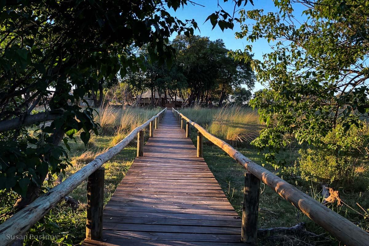 The wooden boardwalk leading to Duba Explorers Camp in the heart of the Okavango Delta