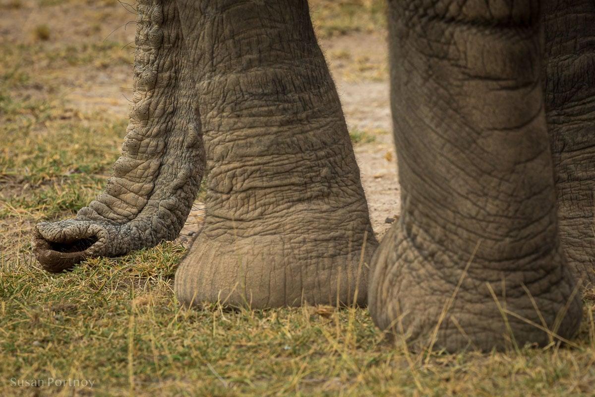 Elephant trunk and feet