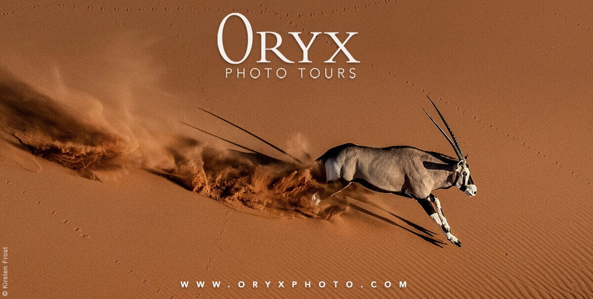 An Oryx running down a sand dune in Namibia - They offer a large selection of photographers for safaris.  Photo credi: Oryx Photo Tours