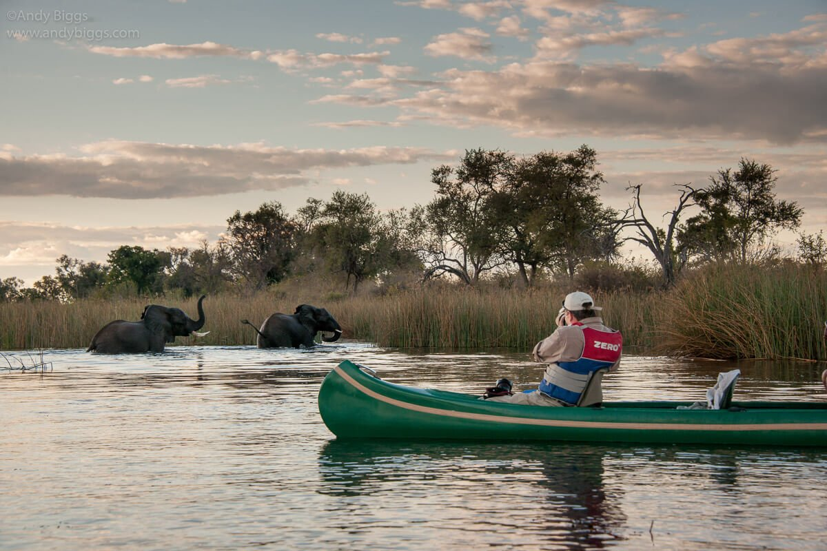 photographing elephants in a mokoro in Botswana