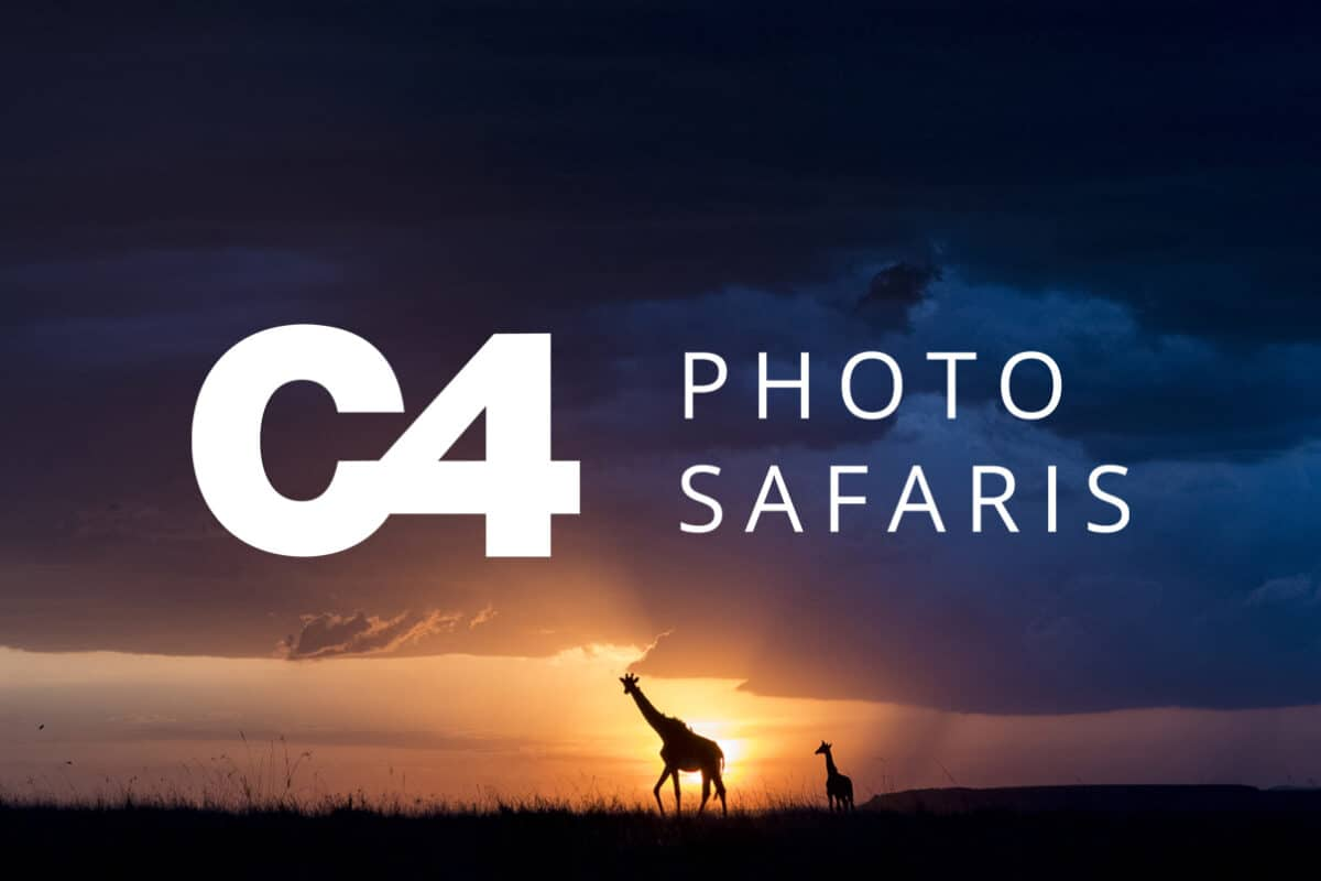 A dramatic photo of two giraffe's silhouetted against a sunset. Taken by professional photographers on safari  Photo Credit: C4 Photo Safaris