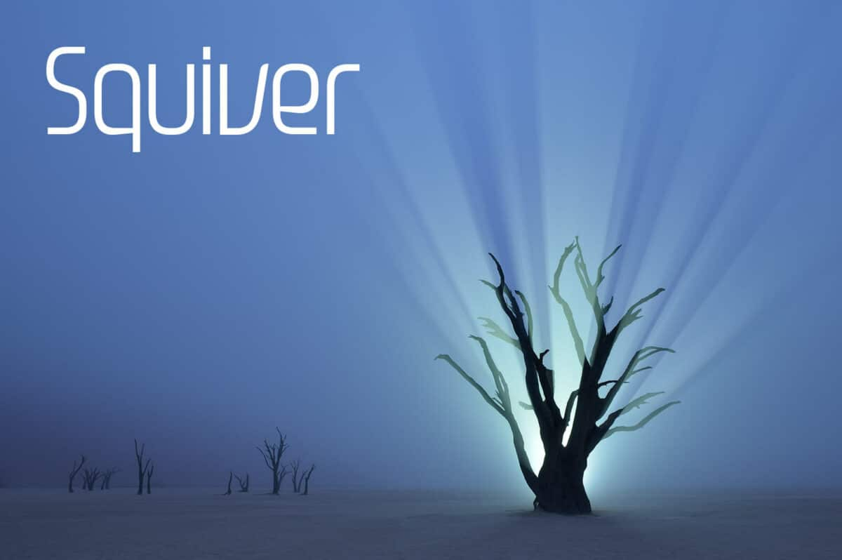 A dead tree lit from behind it. A promotional photo for Squiver.  Photo: Squiver