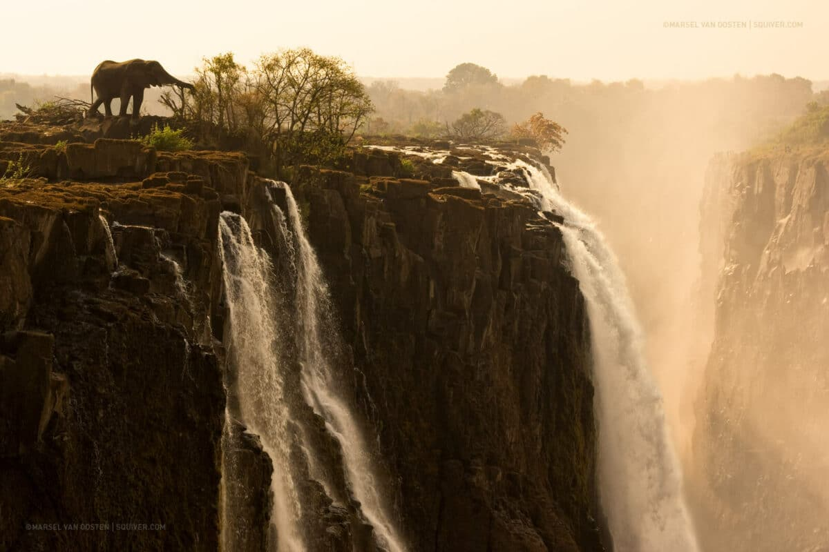 An elephant drinks from Victoria Falls in Zambia