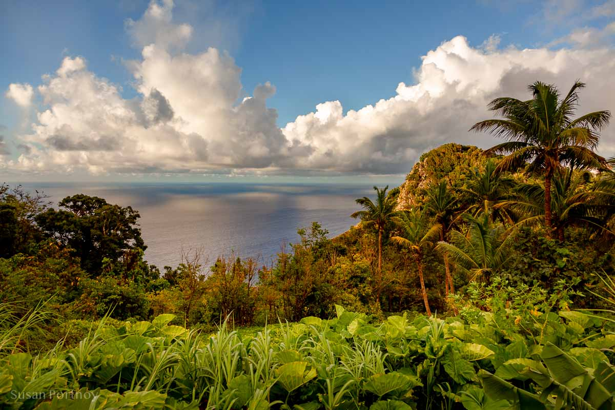 a beautiful view of palm trees and the ocean from a spot on Saba Island