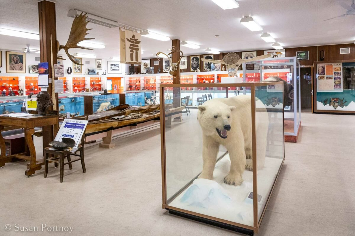 Stuffed polar bear inside the Itsanitaq Museum - One of the many things to see in Churchill, Manitoba