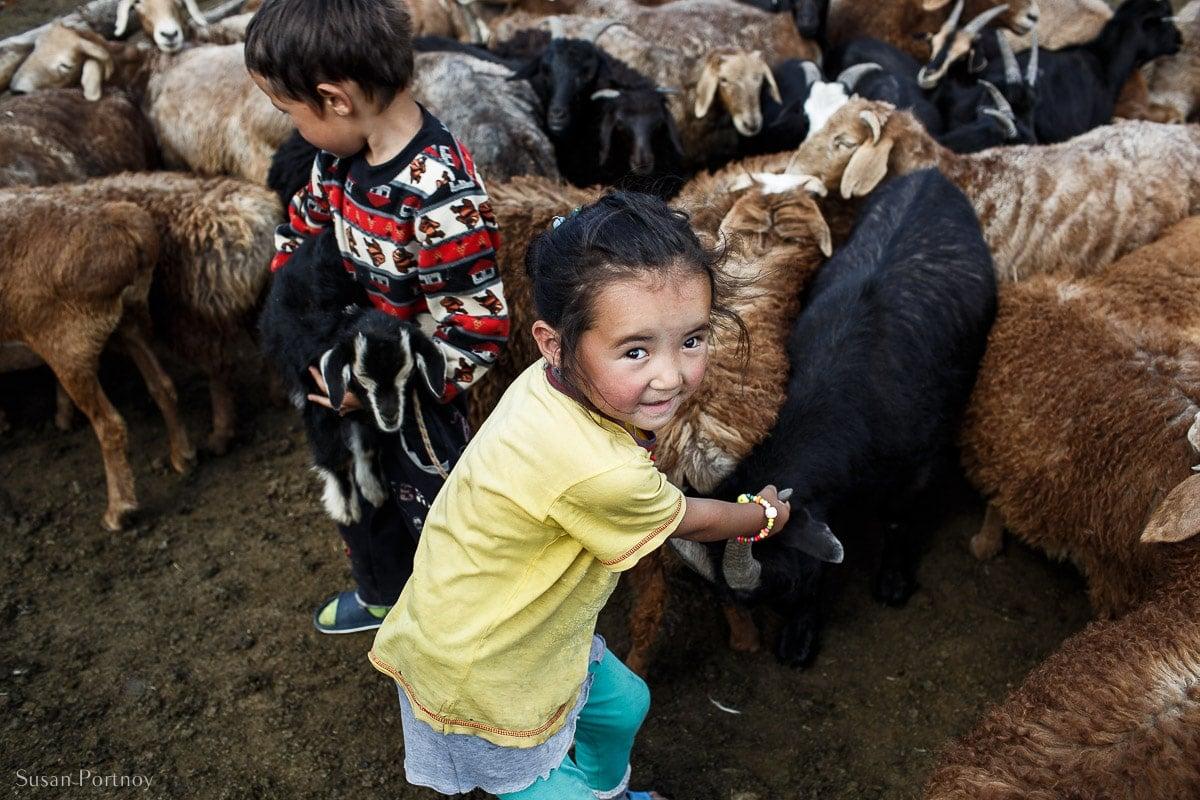 Little Kazakh girl pulling goat from herd for milking in Mongolia