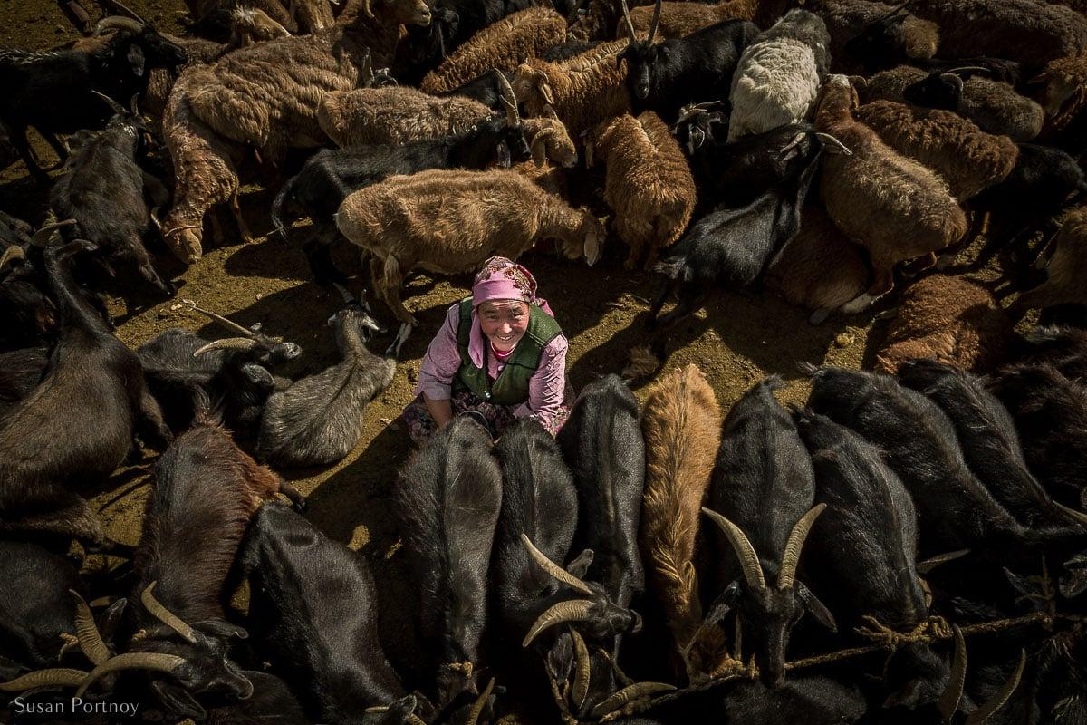 Kazakh Woman milking goats in Altai Tavan Bogd National Park, Mongolia